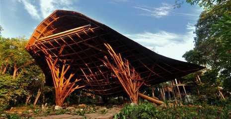 Bambu quando la materia prima puoi crearla tu for Vendita piante bambu gigante