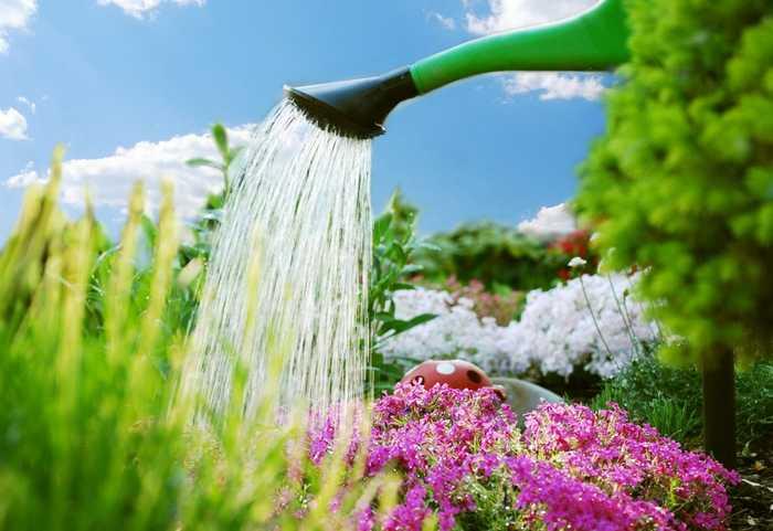 Metodi di irrigazione per fiori e piante orti e giardini for Tecniche di irrigazione