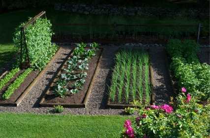 Metodi di irrigazione per fiori e piante orti e giardini for Irrigazione piante
